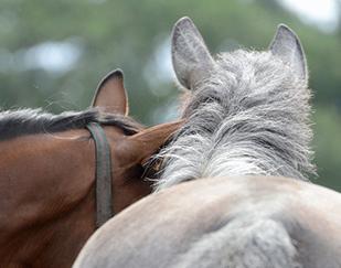 paardenhotel-reserveren