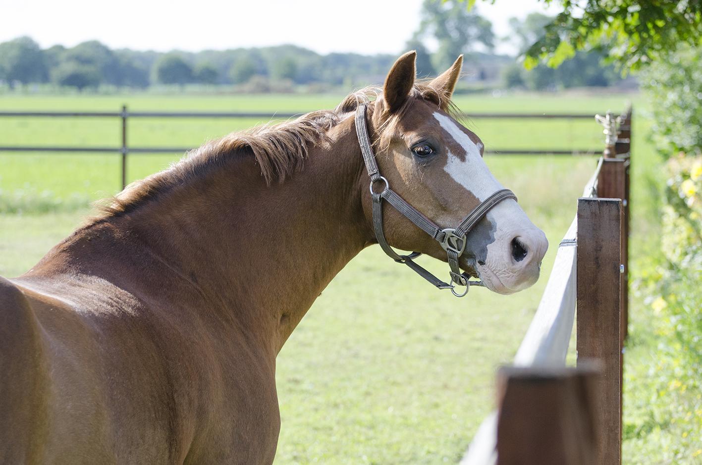 paardenhotel_2012_07_k
