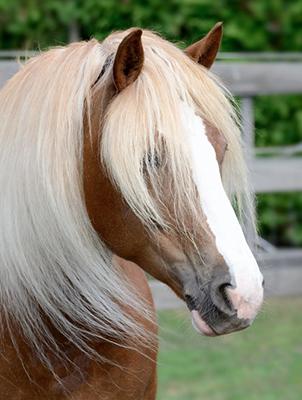 tarieven_paardenhotel
