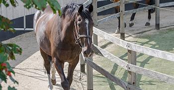 verzorging-beweging-paardenhotel