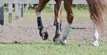 verzorging-lopen-paardenhotel