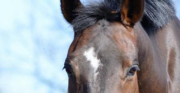 verzorging-voeding-paardenhotel