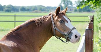 verzorging-weide-paardenhotel